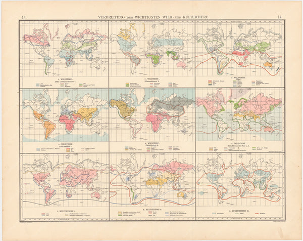 World Map 1899: Wildlife and Culture
