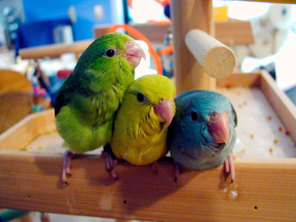 <center>The Quietest Pet Birds Great For Apartment Living - How To Choose A Calm Parrot</center>