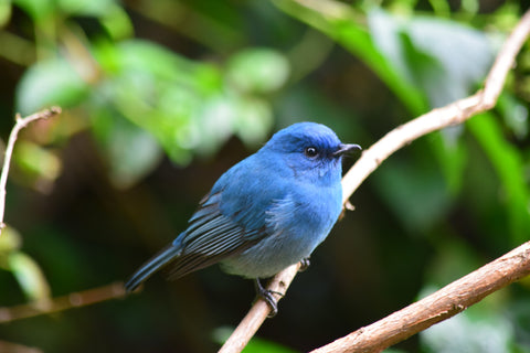 blue bird perched on branch in forest