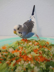 parrot in bowl of vegetables