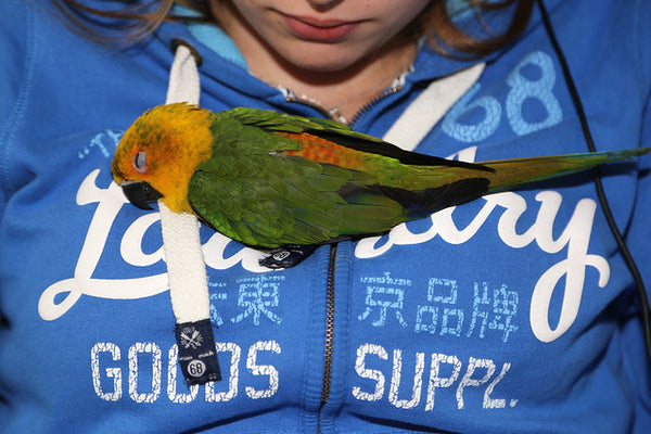 jendaya parakeet sleeping on top of woman's jacket