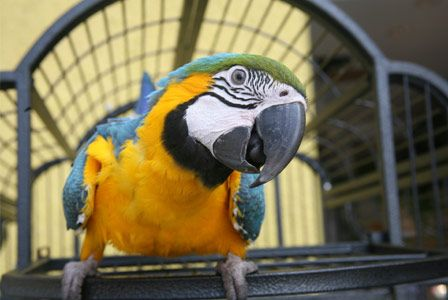 How Much Is A Parrot? Full Cost of Pet Bird Ownership (in 2019)