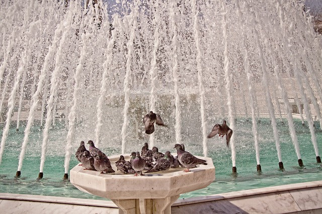 bird bath fountain with lots of pigeons playing in it