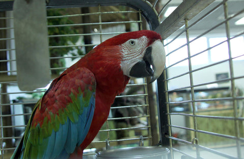 How To Transition Your Parrot Into A New Home Or New Cage