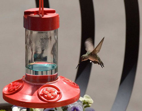 dr jb's clean hummer feeder from songbird essentials