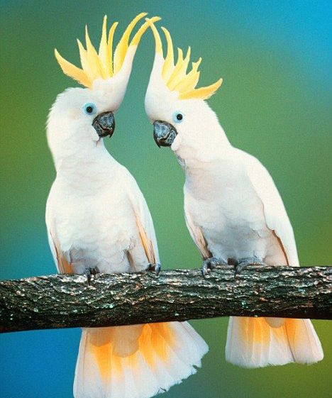 The Best Talking Birds To Have