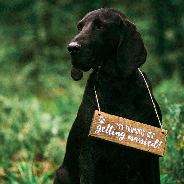 My Humans Are Getting Married Dog Sign | Wood Wedding Sign - Designed With Love