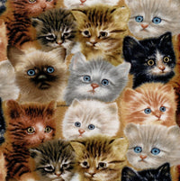 Cats Packed Cat Faces