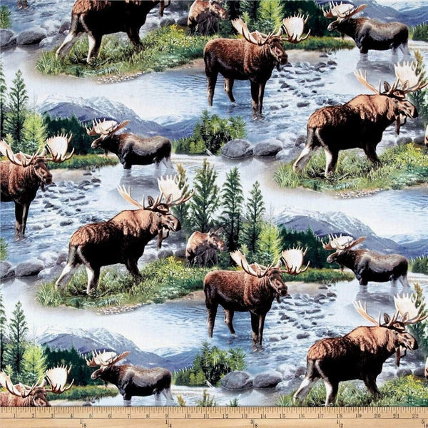 Moose Scenic Animal Lake Massapequa