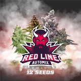 Red Line Automix X12 - BSF Seeds
