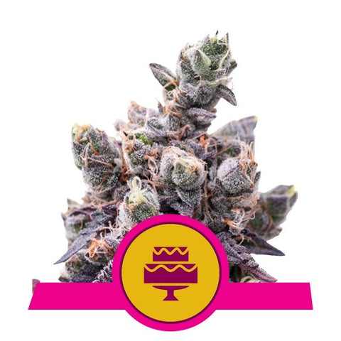 Wedding Gelato x 3 Semillas Feminizadas