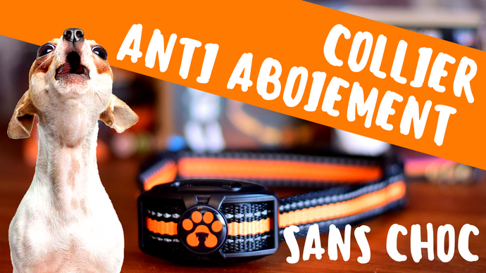 Types de collier anti aboiement