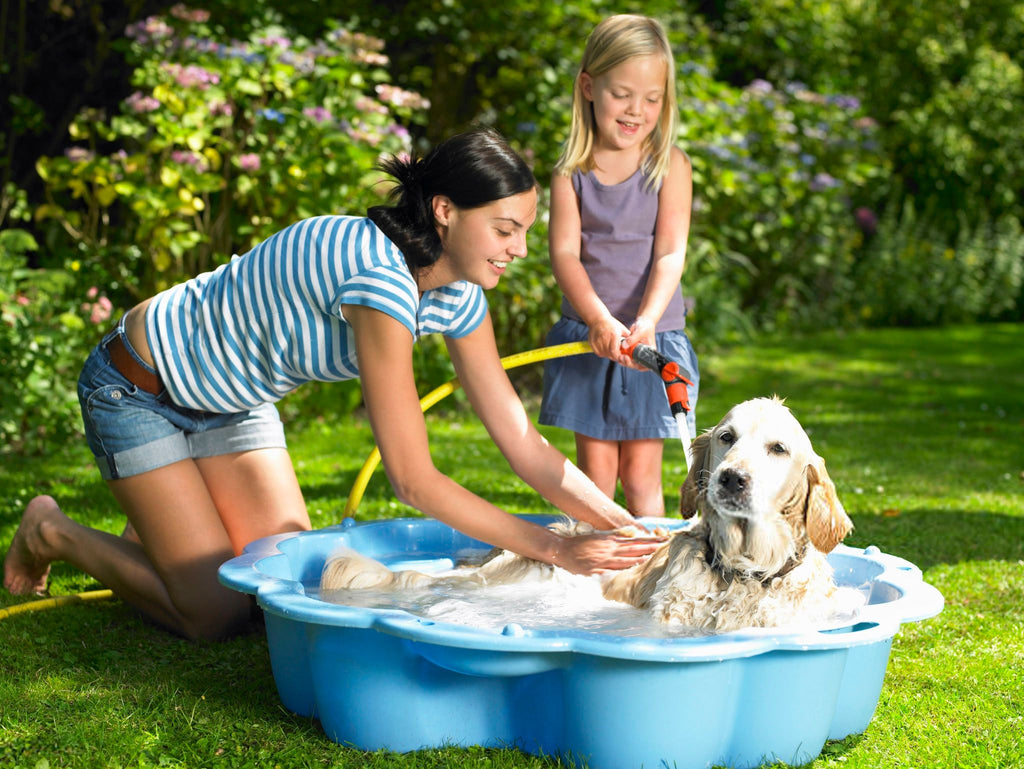 Comment bien laver son chien  one pets-top