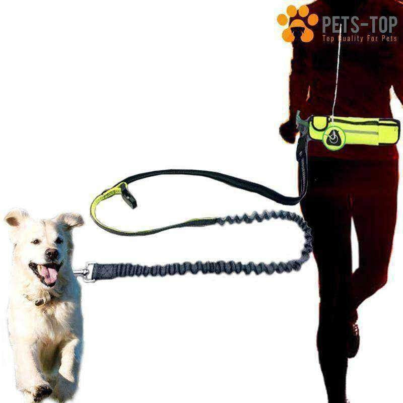 Kit Running Chien - One PETS-TOP