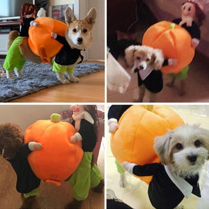 Pumpkin Halloween Dog Costume