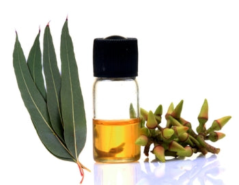 Eucalyptus (healing, purification, antibacterial)