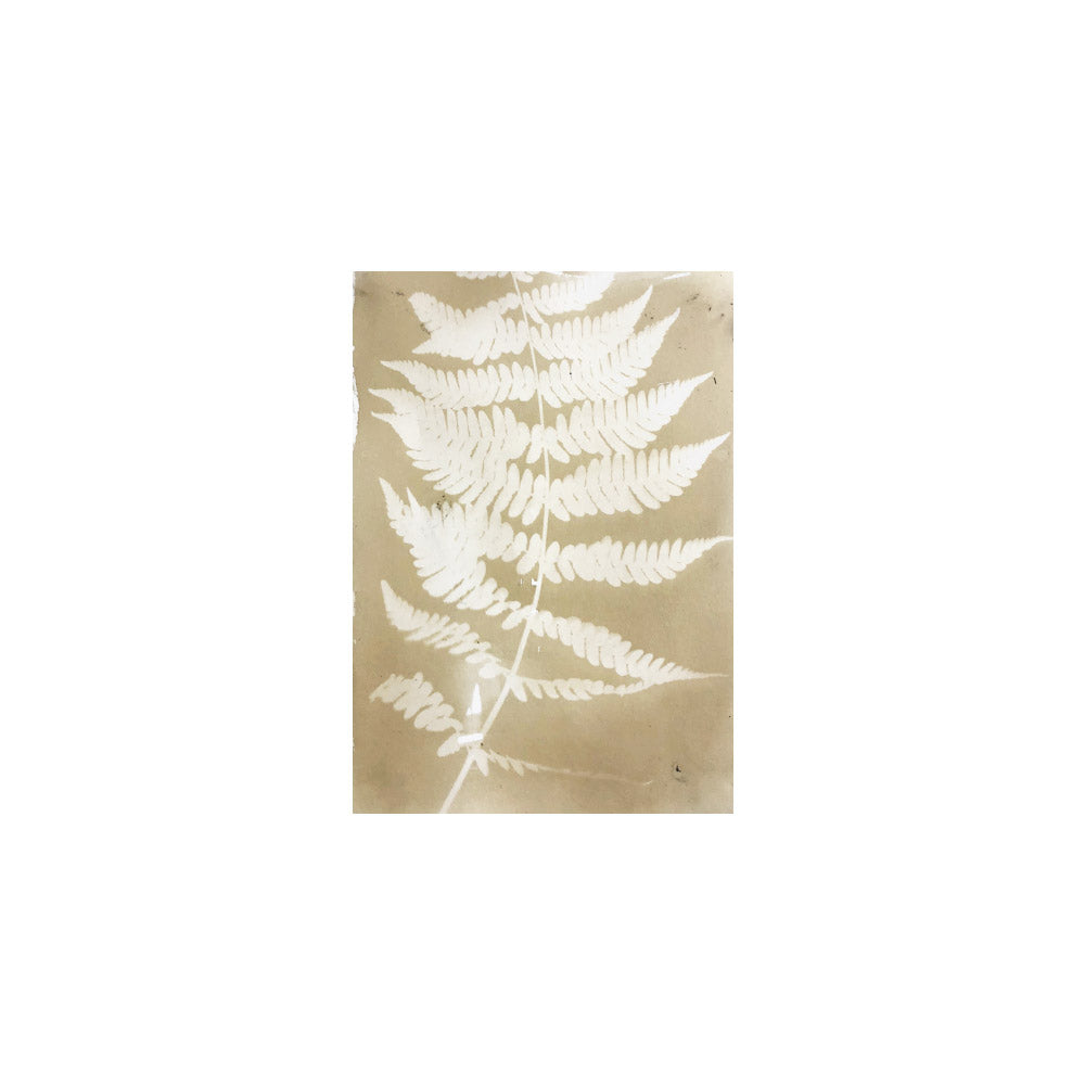Autumn Fern I // CLOTH & KIND