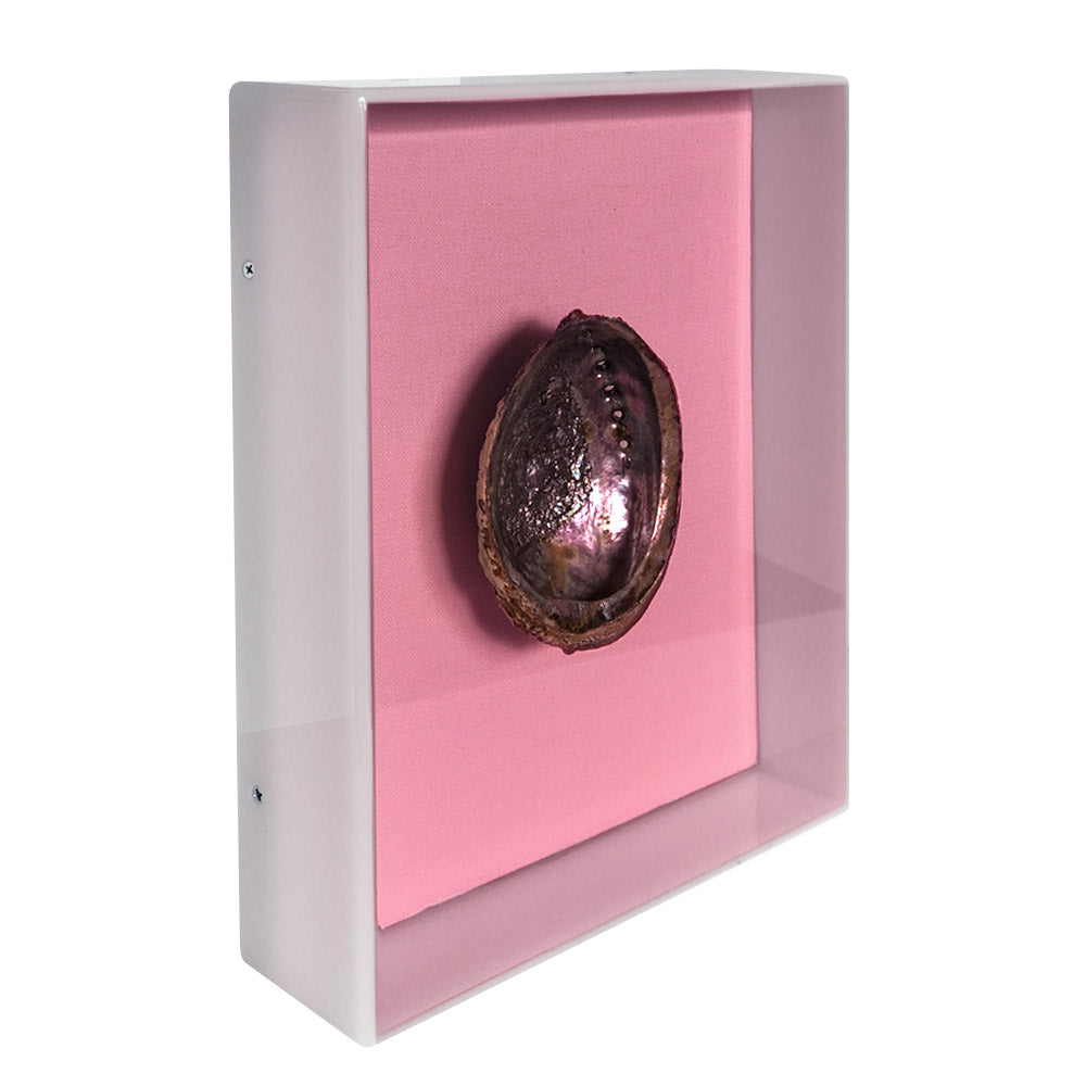 Abalone Oyster Shell in Pink Acrylic Box // CLOTH & KIND