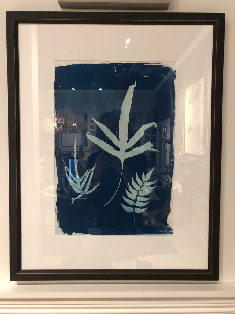 3 Ferns, Includes Framing