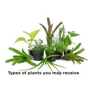 18x18x36 Tall Vivarium Plant Kit (3 Plants)