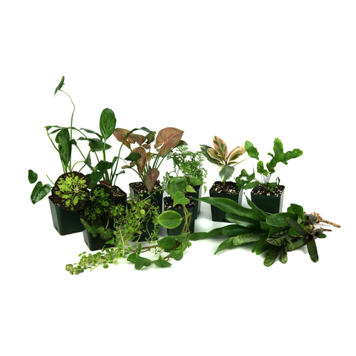 55 Gallon Tropical Vivarium Plant Kit