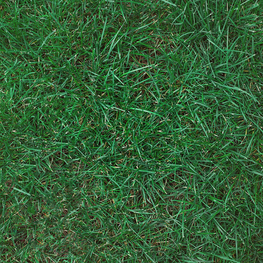 Kentucky Bluegrass 85/80 (50 lb.)