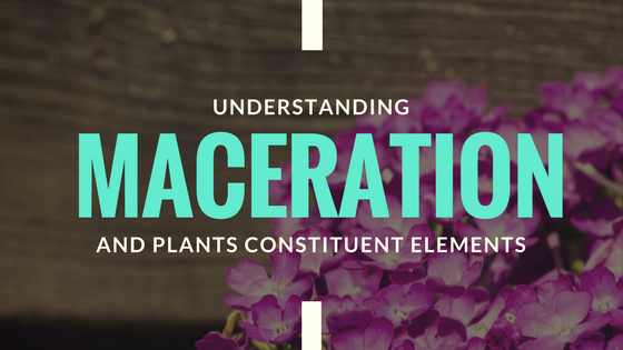 Oil Maceration vs. Essential Oils