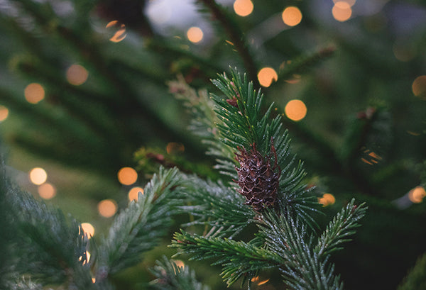 How Long Do Christmas Trees Last? Here's What You Should Know