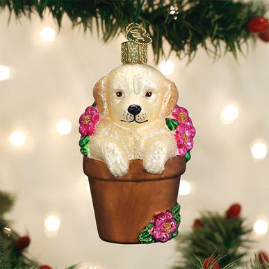 Puppy In Flower Pot
