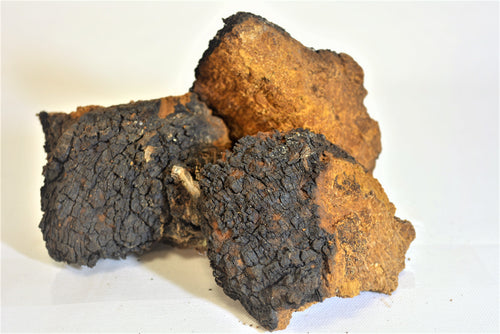 Chaga Chunks - Wild Harvested in Canada