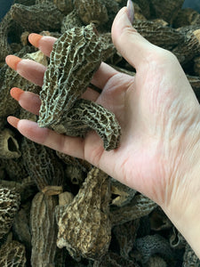 "Dried Morels - Wild Foraged in northern Canada - Large Sizes 5cm+, Perfect ""Stuffers"""