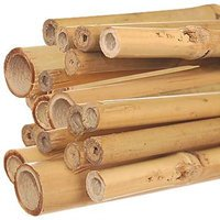 Bamboo  poles 12 ft. long x 1-1/4 in.   (Package of 25)  - Mitzvahland.com All your Judaica Needs!