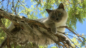 Why Do Cats Get Stuck In Trees? 5 Cat Questions And Answers