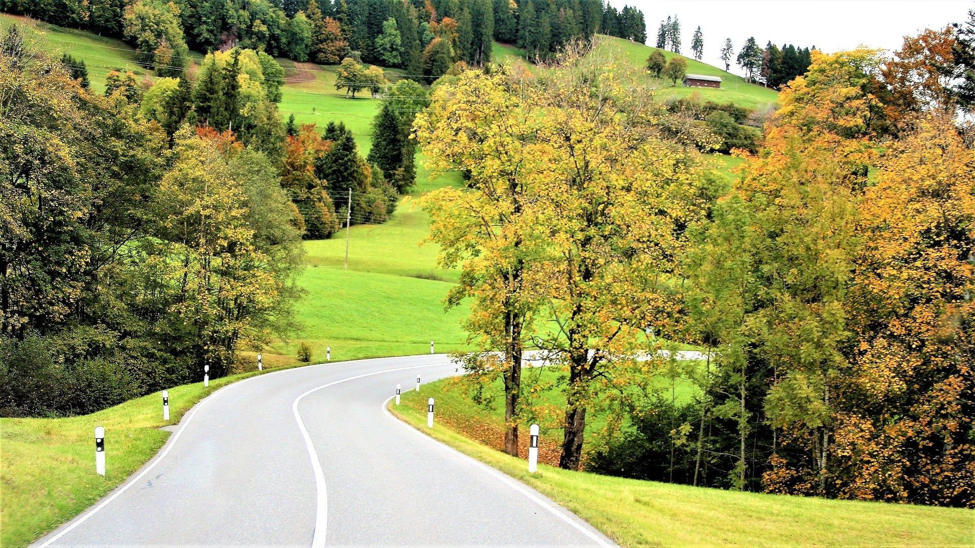 Road with greenery