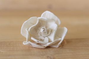 "2.5"" Sola Magnolias (Set of 12)"