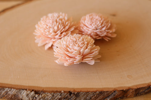 Blush Pink Sola Wood Zinnia Flowers 2