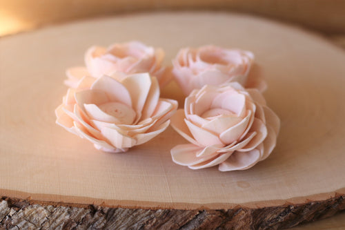 Blush Pink Sola Wood Poppy Flowers 2