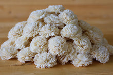 Wholesale/Bulk Sola Carnations 2""