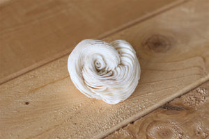 "Sola Shell Flowers 2""  ( Set of 12 )"