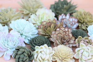 Mixed Assorted Sola Wood Succulents