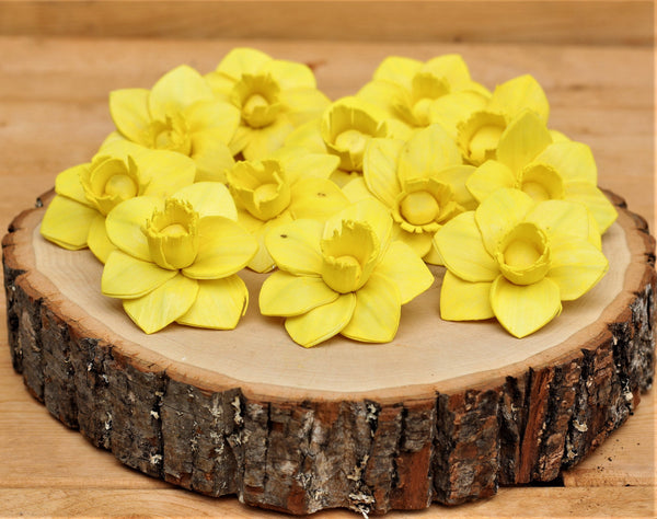 Yellow Sola Wood Trumpet Daffodil Flowers 2""