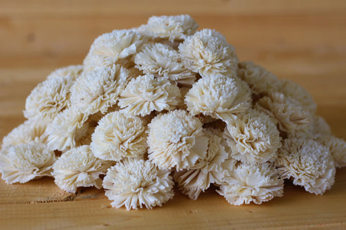 Wholesale /Bulk Sola Wood Carnations ( 50 count )