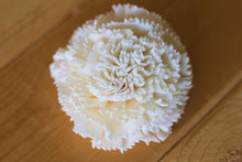 "2"" Sola Carnations ( Set of 12 )"