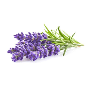 🜛 Lavender Essential Oil