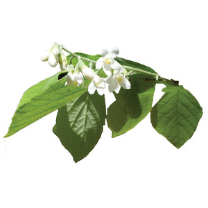 🜑 Styrax Essential Oil