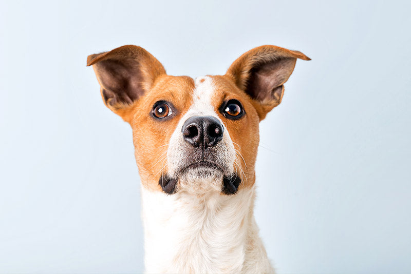 Why Should I Use Probiotics for my Dog?