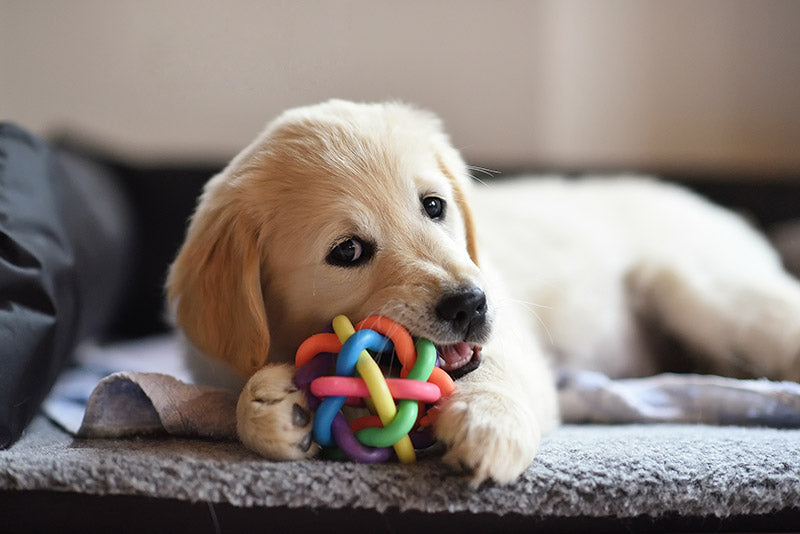 How to Deal with Teething Puppies