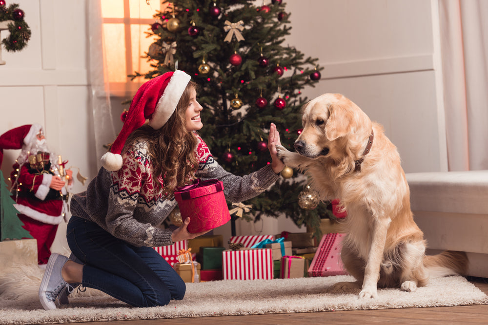 9 Gift Ideas for the Dog Lover on your List