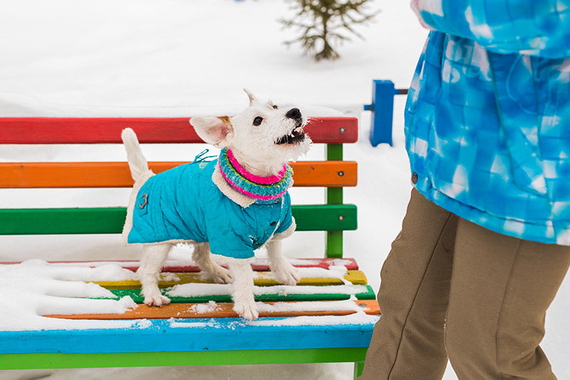Keeping Your Dog Safe & Warm This Winter