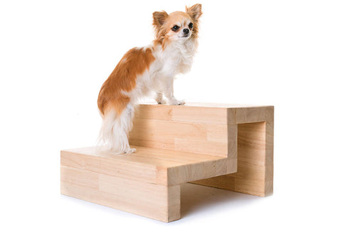 dog on wood stairs